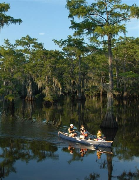 Caddo Lake Boat Rental by The World S Catalog Of Ideas