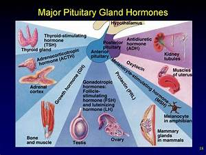 Internal Secretion  Basic Concepts  Pituitary Hormones And Their Control By The Hypothalamus