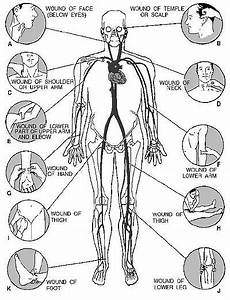 Self Defense Pressure Points Chart Adventist Youth Honors Answer Book Health And Science