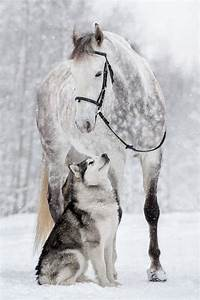 Friendship Between a Horse And Husky Dog Caught In ...
