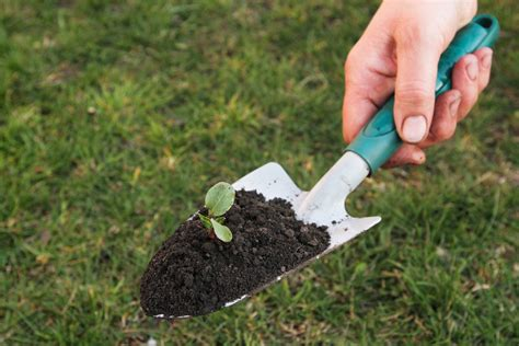 tools used for gardening using gardening trowels when and how to use a trowel in