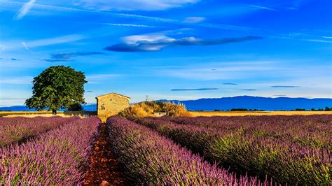 pictures provence france nature sky fields lavender