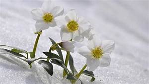 Mit Bl U00fchenden Winterpflanzen Das Heim Schm U00fccken