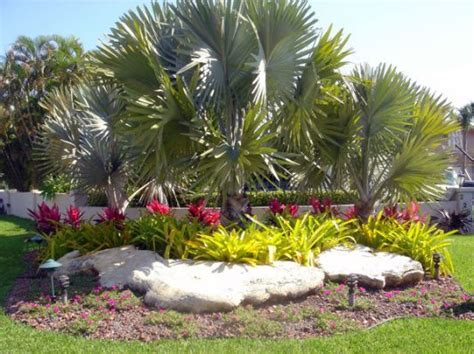 florida tropical landscaping ideas south florida landscape ideas proyectos pinterest landscaping outdoor ideas and