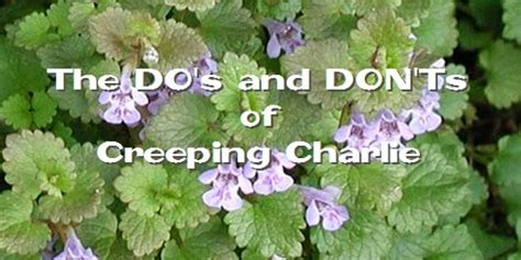 how to get rid of creeping naturally borax and vinegar
