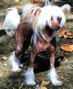 Anti Allergie Hund : hunde f r allergiker k nnt ihr mr welche nennen hund allergie hunde allergie ~ Orissabook.com Haus und Dekorationen
