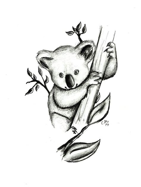 koala drawing pictures google search drawings baer