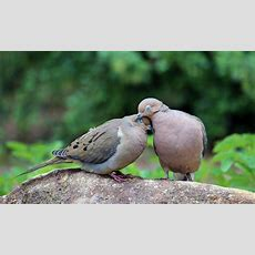 Be Like Two Turtle Doves  Spread The Love  Blog Procurious