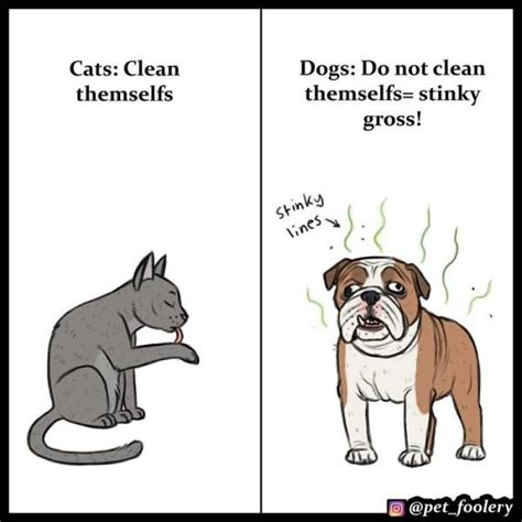 cats dogs better than why then dog cat vs debate reasons comics decided settle hilarious explaining superior these pet explain