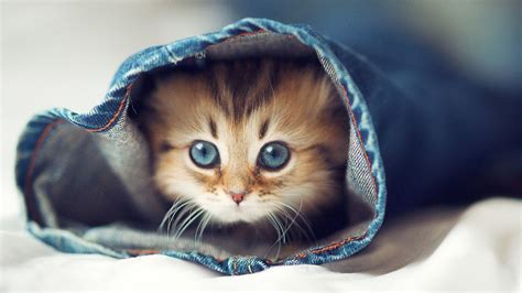 aesthetic baby cat wallpapers