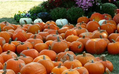 pumpkins and fall pictures fall pumpkins background images
