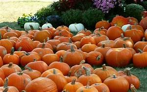 Autumn Pumpkin Backgrounds | wallpaper, wallpaper hd ...
