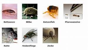 Schädlinge In Der Küche Bilder : sch dlinge im haushalt das gro e krabbeln teil 1 ~ Lizthompson.info Haus und Dekorationen