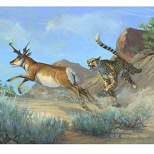 Extinct North American Cheetah and Pronghorn ...