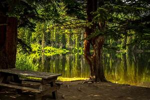 Nature, Trees, Forest, Water, Hd, Wallpapers, Desktop, And