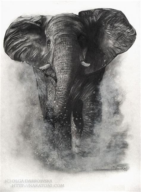 drawing   elephant art  deviantart pinterest