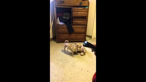 Funny Vine Dog Having Sex With Teddy Bear YouTube