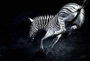 Schwarz Weiß Bilder Tiere : bilder thread seite 5758 allmystery ~ Markanthonyermac.com Haus und Dekorationen
