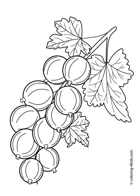 flavoursome gooseberry colouring pages picolour