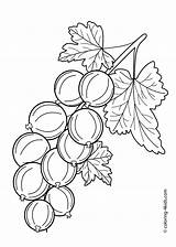 Coloring Pages Gooseberry Fruits Berries Colouring Printable Fruit Drawing Drawings 4kids Sheets Picolour Vegetable Vegetables Navštiviť sketch template