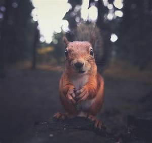 Candid moments with forest creatures photographed by for Candid moments with forest creatures photographed by konsta punkka
