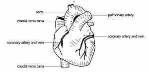 Bluendi  Label Heart Diagram Worksheet