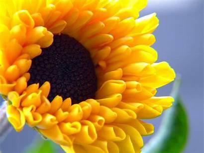 Desktop Summer Flower Wallpapers Flowers Latoro Bright