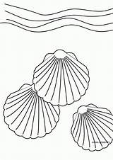 Coloring Shell Pages Dessin Seashell Printable Shells Sea Coquillage Coloriages Coloriage Des Colour Colouring Thedrawbot Popular Ocean Drawings Beach Coloringhome sketch template