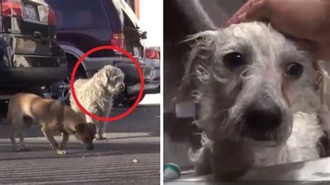 un petit chien dans la rue ces chiens auraient pu mourir dans la rue mais ce que ces b 233 n 233 voles ont fait est g 233 nial
