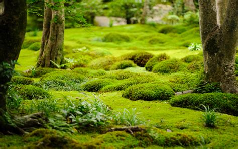 moss garden kyoto jeffrey friedl s blog 187 more from the gioji temple lotsa moss and bamboo