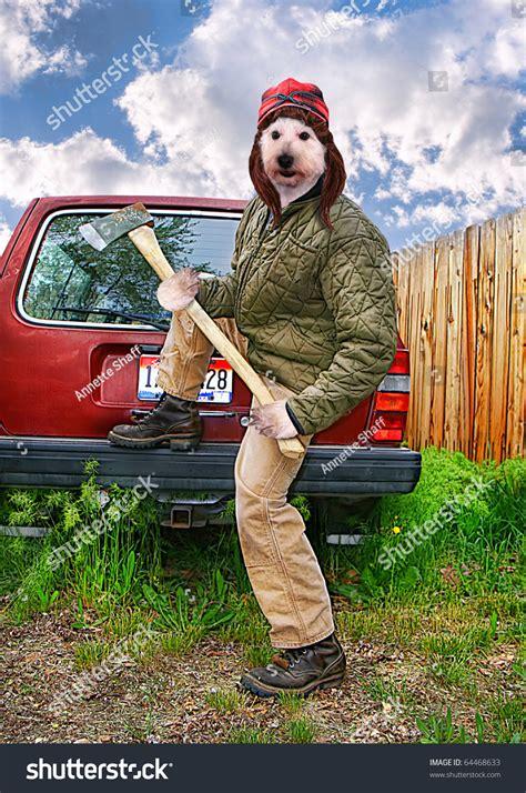 redneck dog axe  hands stock photo  shutterstock