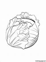 Cabbage Coloring Pages Printable Sprout Vegetables Drawing Fruits Brussel sketch template