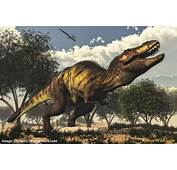 Albertosaurus Facts Pictures & Information For Kids