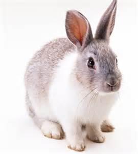 ウサギ:... 殺されたウサギ・ゆきのすけ