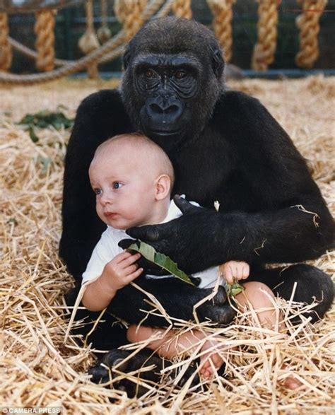 dad put baby   cage    pound gorilla