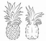 Pineapple Coloring Section Printable Cross Pineapples Fruit Tattoo Pinapple Drawing Supercoloring Cartoon Getdrawings Sliced Fruits Simple sketch template