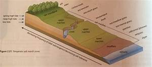 Coastal Ecosystems  U2013 Edexcel Igcse Geography