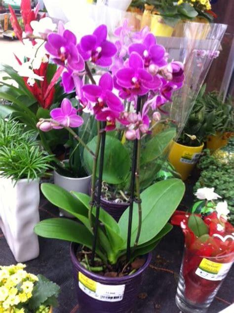 exotische pflanzen im heimischen garten und terrasse