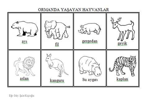Hayvan Boyama Pdf Boyama Sayfasi