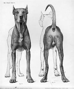 37 Best Horse Anatomy Images On Pinterest