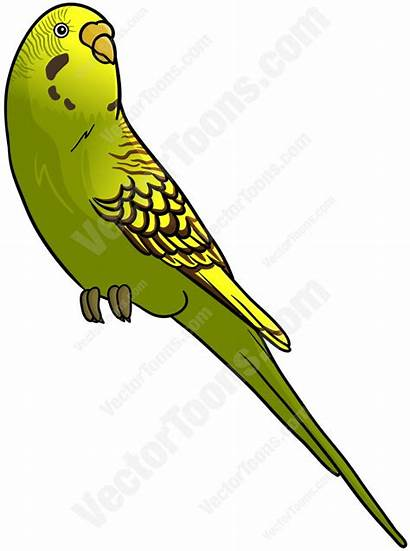 Budgie Yellow Budgerigar Clipart Clipground