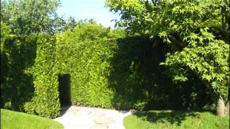 Japanischer Garten Marzahn by Japanischer Garten Marzahn Bild Zierkirsche Prunus