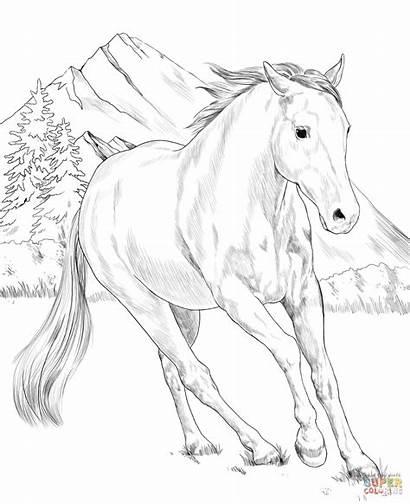 Coloring Paint Horse American Colorir Adult Printable