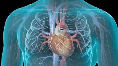 Heart Cardiology Cardiovascular Cardiac Failure Interventional Health
