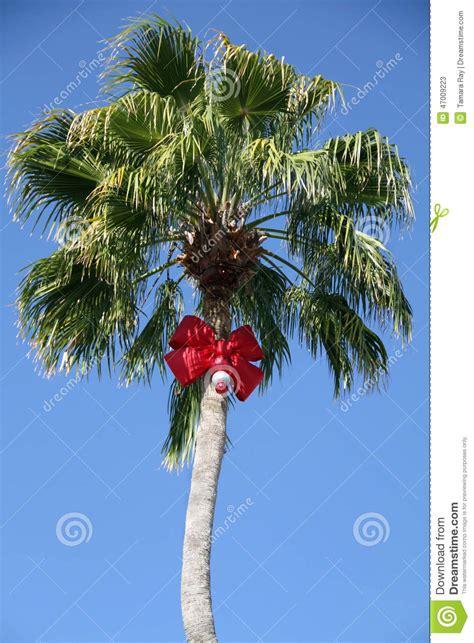 christmas palm tree stock photo image