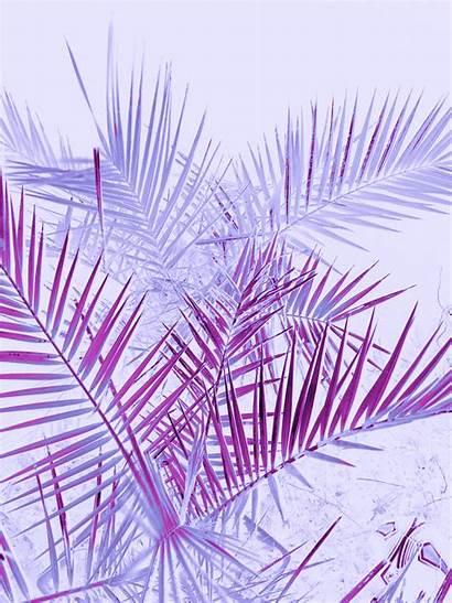 Pastel Aesthetic Purple Transparent Wallpapers Iphone Lunapic