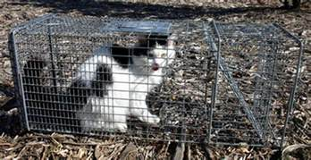 cat traps cats taking toll on tweed fauna echonetdaily