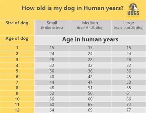 find   dogs age  human years  dogs network