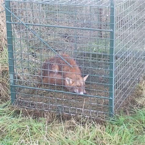 ducatillon cage sp 233 ciale renard pi 232 ges et r 233 pulsifs