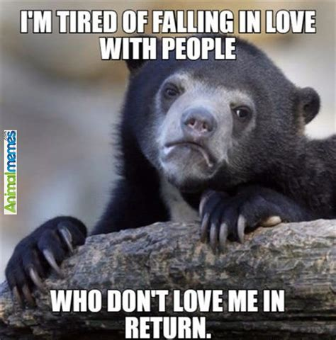 Im Tired Meme - tired animal memes image memes at relatably com